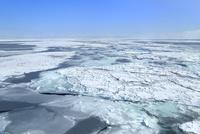 おーろら号よりオホーツク海の流氷原