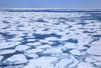おーろら号よりオホーツク海網走沖の蓮葉氷流氷帯