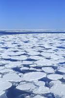 おーろら号よりオホーツク海網走沖の蓮葉氷流氷帯 11076031298| 写真素材・ストックフォト・画像・イラスト素材|アマナイメージズ
