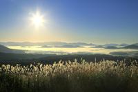 蒜山高原の雲海と朝日にススキ 11076031354| 写真素材・ストックフォト・画像・イラスト素材|アマナイメージズ