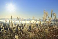 蒜山高原の雲海と朝日にススキ 11076031355| 写真素材・ストックフォト・画像・イラスト素材|アマナイメージズ