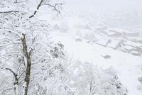 城山展望台より望む降雪の白川郷合掌造り集落 11076031372| 写真素材・ストックフォト・画像・イラスト素材|アマナイメージズ