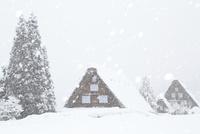 雪降る白川郷合掌造り集落