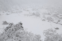 城山展望台より望む降雪の白川郷合掌造り集落 11076031414| 写真素材・ストックフォト・画像・イラスト素材|アマナイメージズ