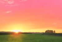 美瑛 新栄の丘と夕日