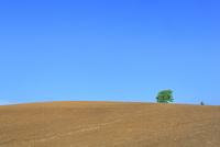 美瑛 土の丘と緑木 11076031527| 写真素材・ストックフォト・画像・イラスト素材|アマナイメージズ