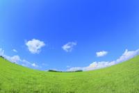 美瑛 緑の牧草の丘と樹林に雲