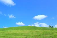 美瑛 緑の牧草の丘と雲