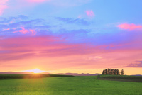美瑛 新栄の丘と夕日 11076031668| 写真素材・ストックフォト・画像・イラスト素材|アマナイメージズ