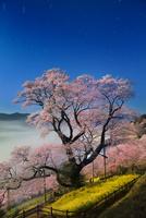 夜空に映えるひょうたん桜と雲海を月光で撮ったイメージ