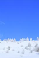 霧ケ峰高原 霧氷の木々 11076031750| 写真素材・ストックフォト・画像・イラスト素材|アマナイメージズ