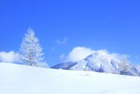 霧ケ峰高原 霧氷のカラマツと蓼科山 11076031752| 写真素材・ストックフォト・画像・イラスト素材|アマナイメージズ