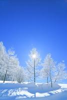 霧ケ峰高原 霧氷の木立と太陽 11076031755| 写真素材・ストックフォト・画像・イラスト素材|アマナイメージズ