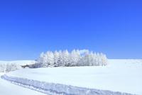 霧ケ峰高原 雪原と霧氷林 11076031756| 写真素材・ストックフォト・画像・イラスト素材|アマナイメージズ