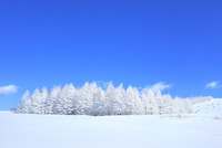 霧ケ峰高原 雪原と霧氷林 11076031757| 写真素材・ストックフォト・画像・イラスト素材|アマナイメージズ