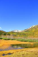 栂池自然園の紅葉と浮島湿原に映る白馬岳 11076031771| 写真素材・ストックフォト・画像・イラスト素材|アマナイメージズ