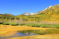 栂池自然園の紅葉と浮島湿原に映る白馬岳 11076031772| 写真素材・ストックフォト・画像・イラスト素材|アマナイメージズ