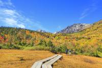 栂池自然園の紅葉と木道