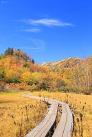 栂池自然園の紅葉と木道 11076031775| 写真素材・ストックフォト・画像・イラスト素材|アマナイメージズ