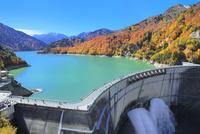 紅葉の黒部ダムと放水 11076031787| 写真素材・ストックフォト・画像・イラスト素材|アマナイメージズ