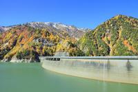 紅葉の黒部ダムと立山