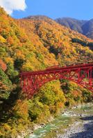 紅葉の黒部峡谷と鉄橋を渡るトロッコ列車
