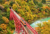 紅葉の黒部峡谷と鉄橋を渡るトロッコ列車 11076031806| 写真素材・ストックフォト・画像・イラスト素材|アマナイメージズ