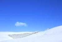 霧ケ峰高原 雪原と霧氷林 11076031847| 写真素材・ストックフォト・画像・イラスト素材|アマナイメージズ