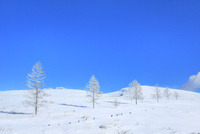 霧ケ峰高原 雪原と霧氷の木立 11076031850| 写真素材・ストックフォト・画像・イラスト素材|アマナイメージズ
