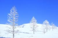 霧ケ峰高原 雪原と霧氷の木立 11076031851| 写真素材・ストックフォト・画像・イラスト素材|アマナイメージズ