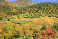 栂池自然園の浮島湿原と紅葉 11076031870| 写真素材・ストックフォト・画像・イラスト素材|アマナイメージズ