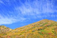 栂池自然園の紅葉 11076031871| 写真素材・ストックフォト・画像・イラスト素材|アマナイメージズ