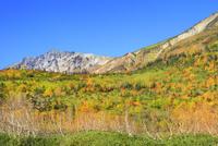 栂池自然園の紅葉と白馬岳 11076031872| 写真素材・ストックフォト・画像・イラスト素材|アマナイメージズ