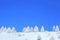 霧ケ峰高原 霧氷の木々 11076031881| 写真素材・ストックフォト・画像・イラスト素材|アマナイメージズ