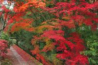 紅葉する哲学の道