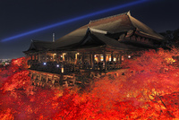 ライトアップされた紅葉の清水寺夜景