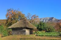 紅葉の大山と茅葺き小屋に実る柿