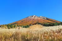 紅葉の大山と桝水高原のススキ 11076031943| 写真素材・ストックフォト・画像・イラスト素材|アマナイメージズ