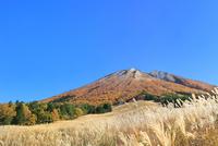 紅葉の大山と桝水高原のススキ 11076031944| 写真素材・ストックフォト・画像・イラスト素材|アマナイメージズ