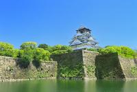 新緑の大阪城内濠と天守閣