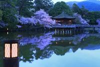 奈良公園 鷺池と浮見堂にサクラの夜景