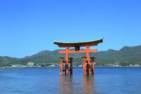 宮島 厳島神社の大鳥居 11076032010| 写真素材・ストックフォト・画像・イラスト素材|アマナイメージズ
