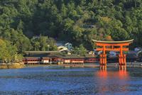 宮島 厳島神社と大鳥居