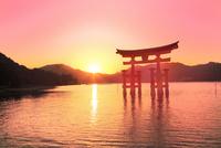 宮島夕景 厳島神社の大鳥居と夕日