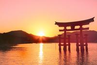 宮島夕景 厳島神社の大鳥居と夕日 11076032022| 写真素材・ストックフォト・画像・イラスト素材|アマナイメージズ
