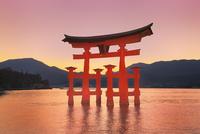宮島夕景 厳島神社の大鳥居