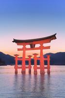 宮島夕景 厳島神社の大鳥居ライトアップ