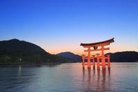 宮島夕景 厳島神社の大鳥居ライトアップ 11076032027| 写真素材・ストックフォト・画像・イラスト素材|アマナイメージズ