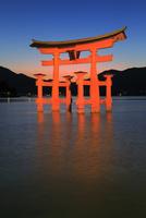 宮島夜景 厳島神社の大鳥居ライトアップ