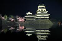 松本城天守閣と内堀に夜桜ライトアップ